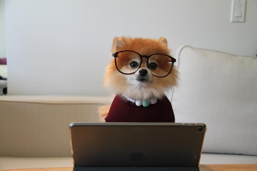 dog with glasses working on a laptop